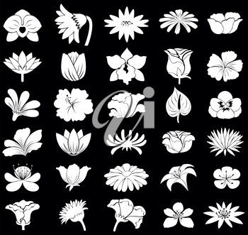 Collection of different types of flowers