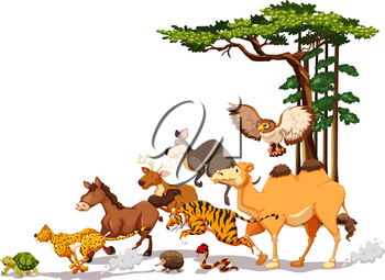 Wild animals in a race competition