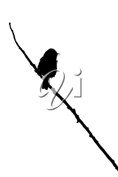 A small bird on a twig (white background)