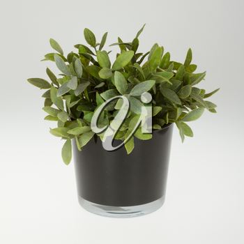 Plastic plant in a flowerpot isolated on white
