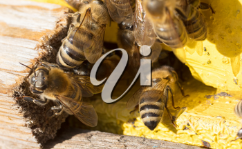 Closeup of a beehive - Bees are working - Selective focus