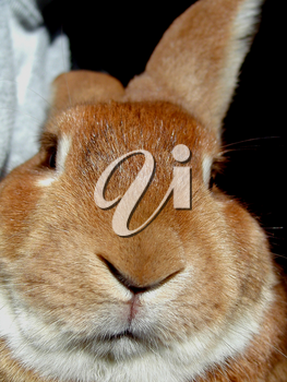 Stock Pictures of Rabbits