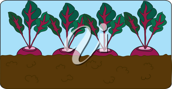 Clip Art Illustration of Beets Growing in a Garden