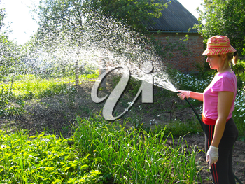 The girl watering a kitchen garden in the country