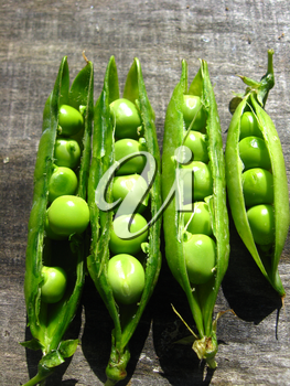 Fresh green pea pods on the plate