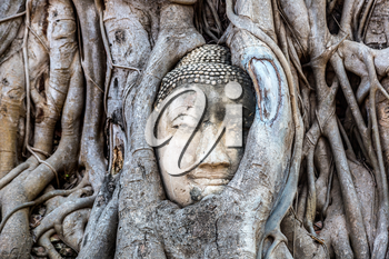 Ayutthaya Head of Buddha statue in tree roots, Wat Mahathat temple, Thailand in a summer day
