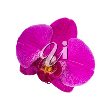 Orchid flower, close up shot. Isolated on white