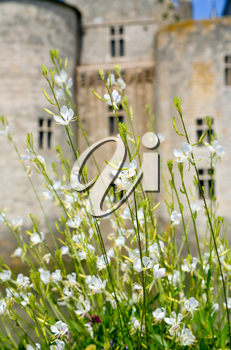 white flowers in front of medieval chateau Sully-sur-loire, France
