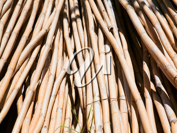 sheaves of dry reed outdoor close up