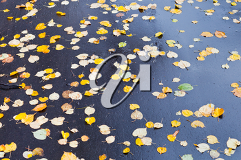 yellow falled leaves on wet asphalt road in autumn day