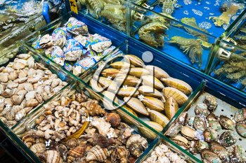 GUANGZHOU, CHINA - MARCH 31, 2107: various clams on Huangsha Aquatic Product Trading Market in Guangzhou city in spring season. This is the largest fresh water fish market in Southern China