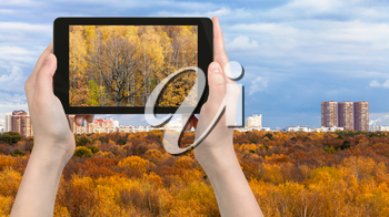travel concept - tourist photographs yellow woods of Timiryazevskiy park in Moscow city in Russia in autumn on tablet