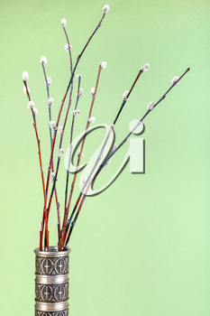vertical pussy willow sunday (palm sunday) feast still-life - downy pussy-willow twigs in vintage pewter jug on green pastel background