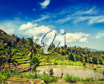Vintage retro effect filtered hipster style image of green rice terraces on Bali island