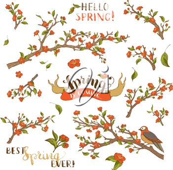 Red blossoms, leaves and bird on tree branches. Isolated on white background. Hand-written brush lettering. Best spring ever! Spring is coming.