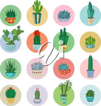 Various cactuses and succulents in flower pots and cups with prickles, flowers and without. Round shapes.