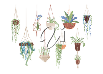 Houseplants in hanging pots flat vector illustrations set. Clay flowerpots and glass vase, interior design elements pack. Greenery, domestic plants collection isolated on white background