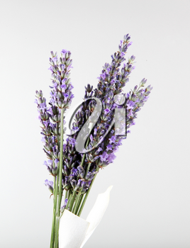 Lavender flower isolated on white background. Lavandula (common name lavender) is a genus of 47 known species of flowering plants in the mint family, Lamiaceae.