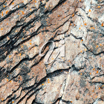 blur  in south africa close up of the coastline stone  abstract  texture background