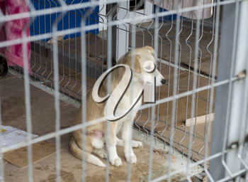 beige dog sitting in a cage, theme charity and mercy, animal shelter, dog rescue, volunteer work