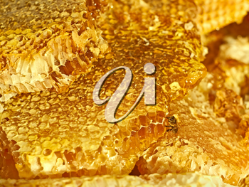 Broken honeycomb with honey, a bee on the honeycomb cells surface