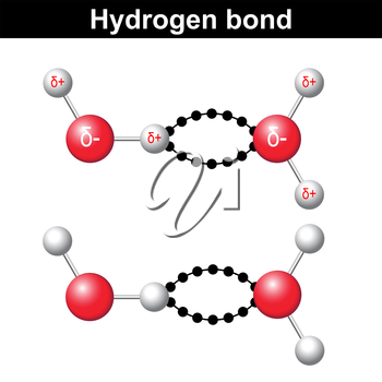 Hydrogen bond chemical illustration,  ionic interaction, 3d water model, vector isolated on white background, eps 8