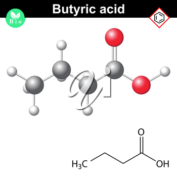 Butyric acid molecule, 2d and 3d illustration of molecular structure, vector on white background, eps 8