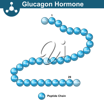 Glucagon hormone chemical structure, 3d illustration, vector on white background, eps 10