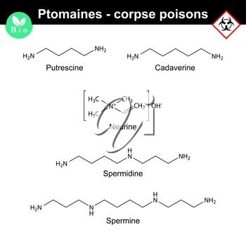 Ptomaines structures - putrescine, cadaverine, nuerine, spermidine and spermine, 2d vector illustration, isolated on white background, eps 8
