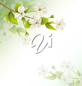 Cherry branch with white flowers on green background