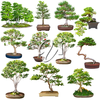Bonsai set isolated on white background. Green tree miniature colletion.