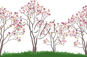 Horizontal Seamless Landscape, Spring Magnolia Trees with Pink Flowers and Green Leaves on Green Grass. Vector