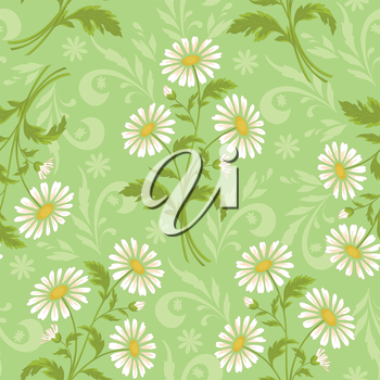 Seamless floral background, chamomile flowers and silhouette on white. Vector