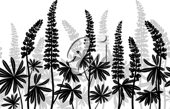 Seamless Horizontal Background of Plant Pictograms, Lupine Leaves and Flowers, Black and Grey on White. Vector