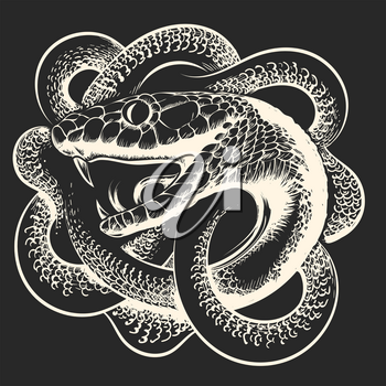 Coiled Snake with open mouth on black background. Vector illustration.