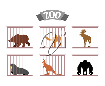 Zoo. Collection of wild animals in cages. Beasts behind bars. Bear and moose in captivity. Kangaroo and camel sit at Zoo. Seal, walrus and Gorilla under control of   person. Animal care.