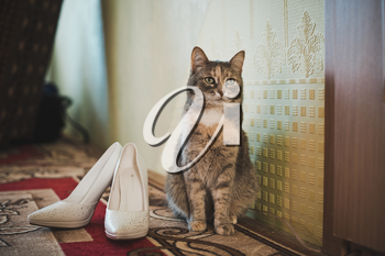 Fluffy gray cat and shoes of the mistress of the bride.