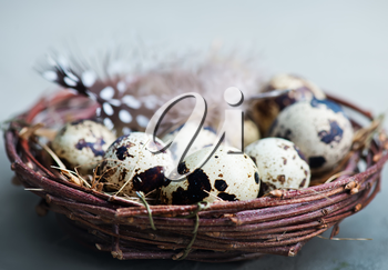 quail eggs in nest and on a table