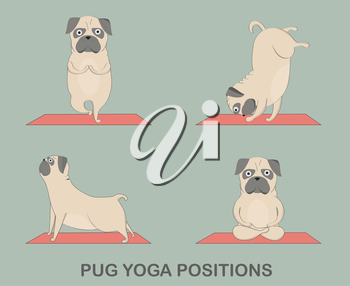 Royalty Free Clipart Image of Pugs Doing Yoga