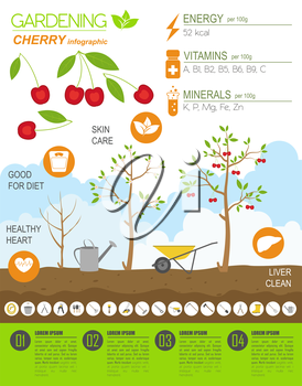 Gardening work, farming infographic. Cherry. Graphic template. Flat style design. Vector illustration