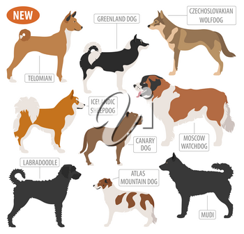 Working, watching dog breeds,  set icon isolated on white . Flat style. Vector illustration