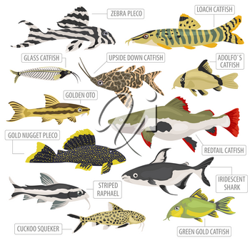 Freshwater aquarium fishes breeds icon set flat style isolated on white. Catfish. Create own infographic about pets. Vector illustration