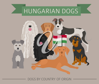 Dogs by country of origin. Hungarian dog breeds. Infographic template. Vector illustration