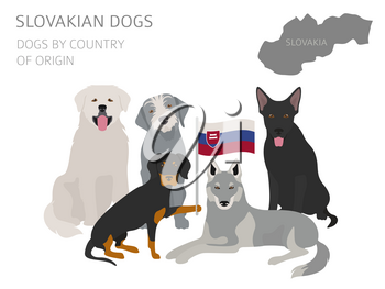 Dogs by country of origin. Slovakian dog breeds. Infographic template. Vector illustration