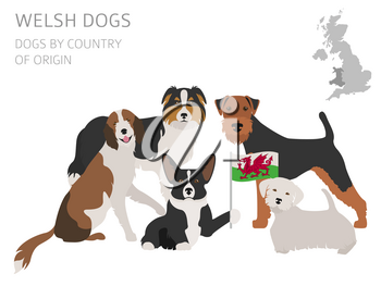 Dogs by country of origin. Walsh dog breeds. Infographic template. Vector illustration. Vector illustration