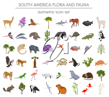 Isometric 3d South America flora and fauna elements. Animals, birds and sea life. Build your own geography infographics collection. Vector illustration