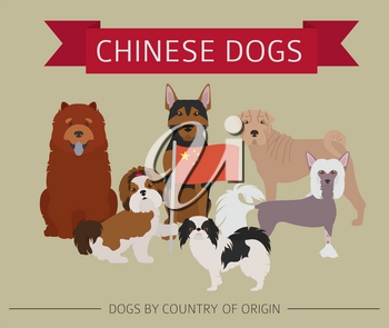 Dogs by country of origin. Chinese dog breeds. Infographic template. Vector illustration