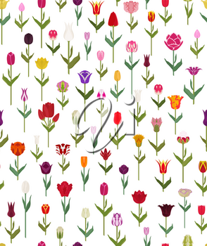 Tulip varieties flat seamless pattern. Garden flower and house plants. Vector illustration