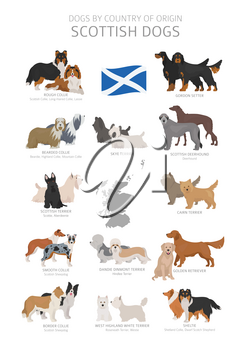 Dogs by country of origin. Scottish dog breeds. Shepherds, hunting, herding, toy, working and service dogs  set.  Vector illustration