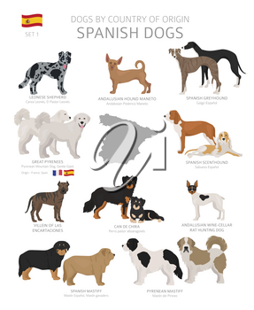 Dogs by country of origin. Spanish dog breeds. Shepherds, hunting, herding, toy, working and service dogs  set.  Vector illustration